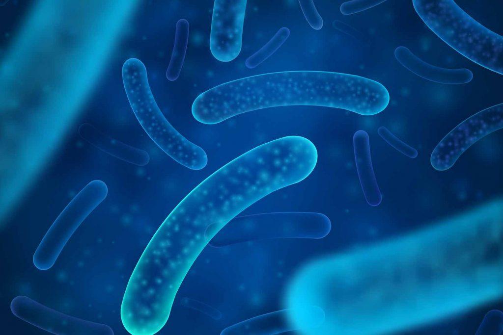 lactobacillus bifidobacterium bifidum