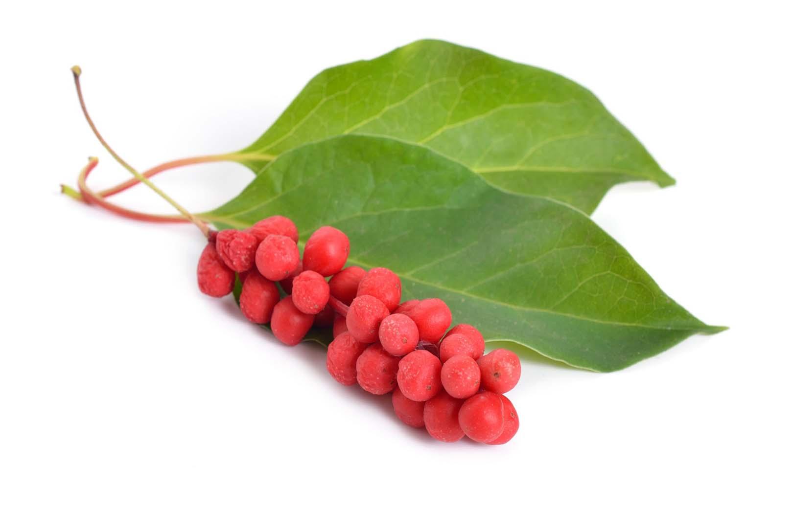 schisandra chinensis fructus